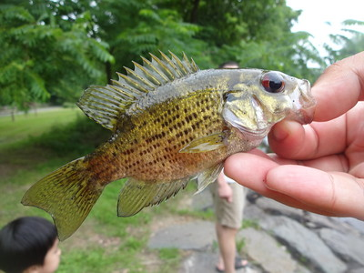 July 9th, 2013 - Rock Bass - Neshaminy Creek