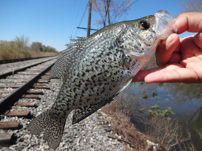 April 20th, 2016 - Black Crappie - Philadelphia Unnamed Canal