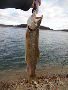 December 3rd, 2016 - Lake Trout - Round Valley Reservoir