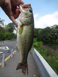 August 24th, 2015 - Largemouth Bass - Runnemede Lake