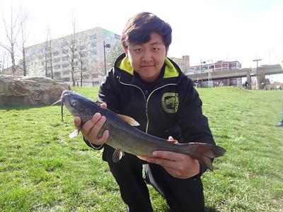 April 13th, 2013 - Channel Catfish - Schuylkill River