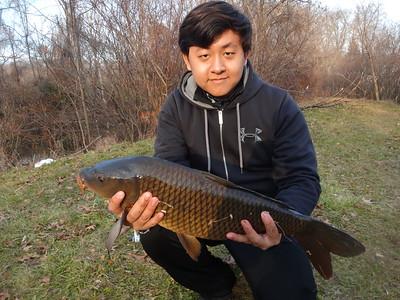 December 1st, 2012 - Common Carp - The Ponds