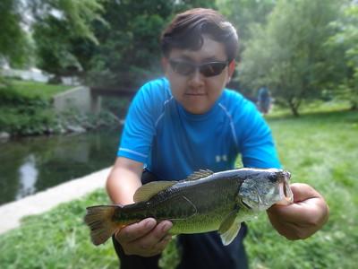 June 22nd, 2014 - Largemouth Bass - Tookany Creek