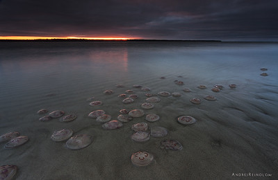 Migration of jellyfishes