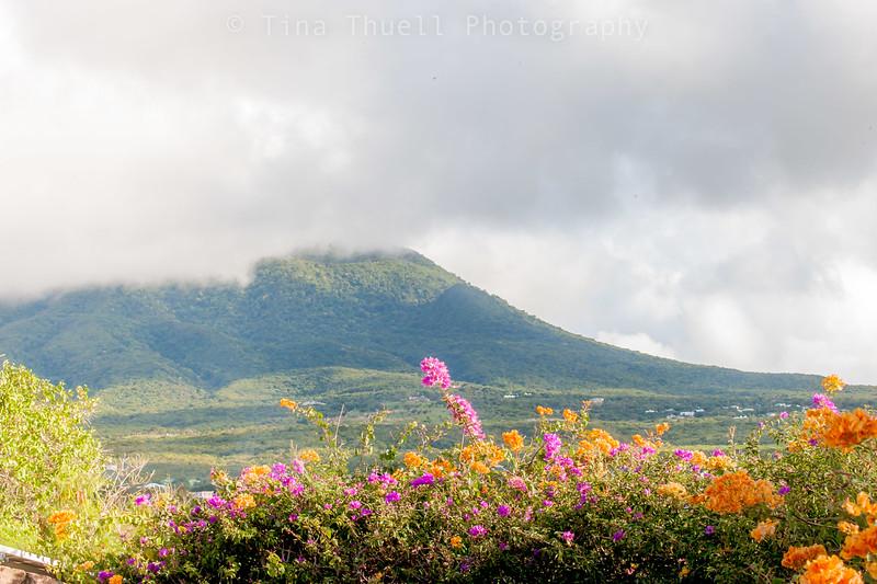 Lower Gardens looking towards Mt. Nevis