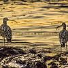 shell beach bird-8741
