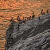 fire pelicans-5975