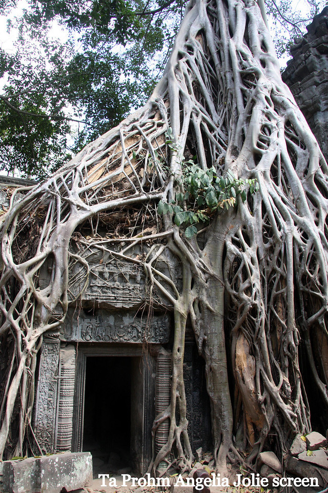 "Ta Prohm Temple, Likely best know for is use in the movie ""Tomb Raider"" with Angela Joiie, it is equally recognized by the Strangler Figs which have done so much damaged with their massive roots. Feb 2009"