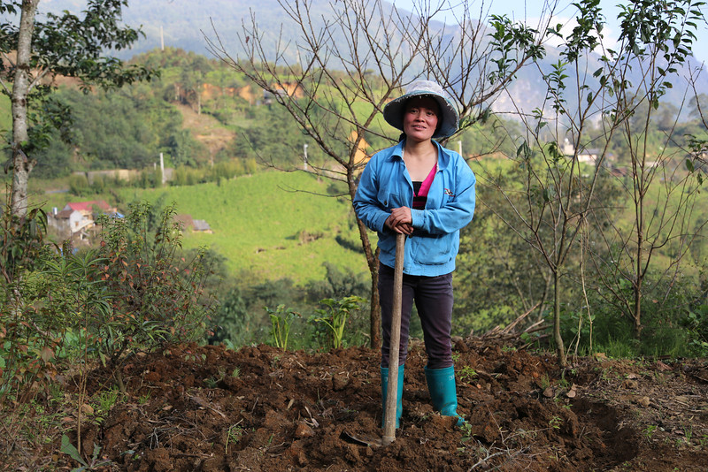 tending to her vegetable garden, on the road to Tram Ton Pass Nov 2013