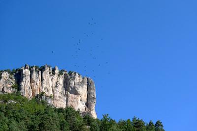 Des vautours vous avez dit ?
