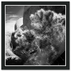 JTree Cactus