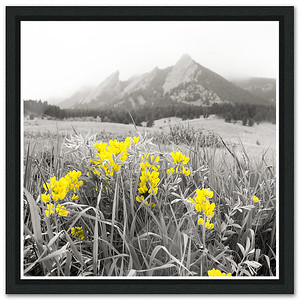 Flatirons with Color Splash
