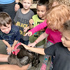 KEVIN HARVISON | Staff photo<br /> Children flock at the opportunity to pet a rooster during the Pittsburg County Free Fair at the Southeast Expo Center Friday.