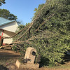 KEVIN HARVISON |<br /> A tree lays in the front yard of a home at 804 East Comanche Avenue after a storm blew through McAlester Tuesday night.