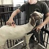 KEVIN HARVISON | Staff photo<br /> Colten Phillips, with Crowder FFA, prepares his goat Betty Boo for showing during the Pittsburg County Free Fair.