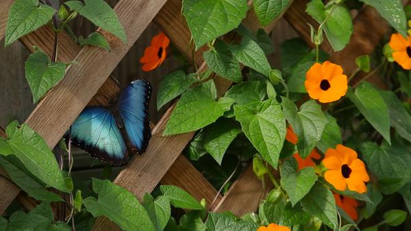 Butterfly 9960138 sooc