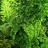 fern wall closeup