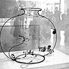 Calder's fishbowl