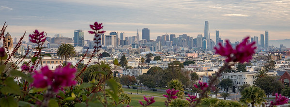 View of the City Skyline from Dolores Park