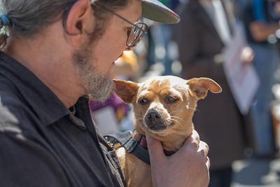 A UU Canine Participant