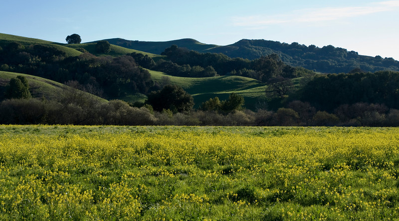 From Alhambra Valley Rd., near Briones Park (2008)