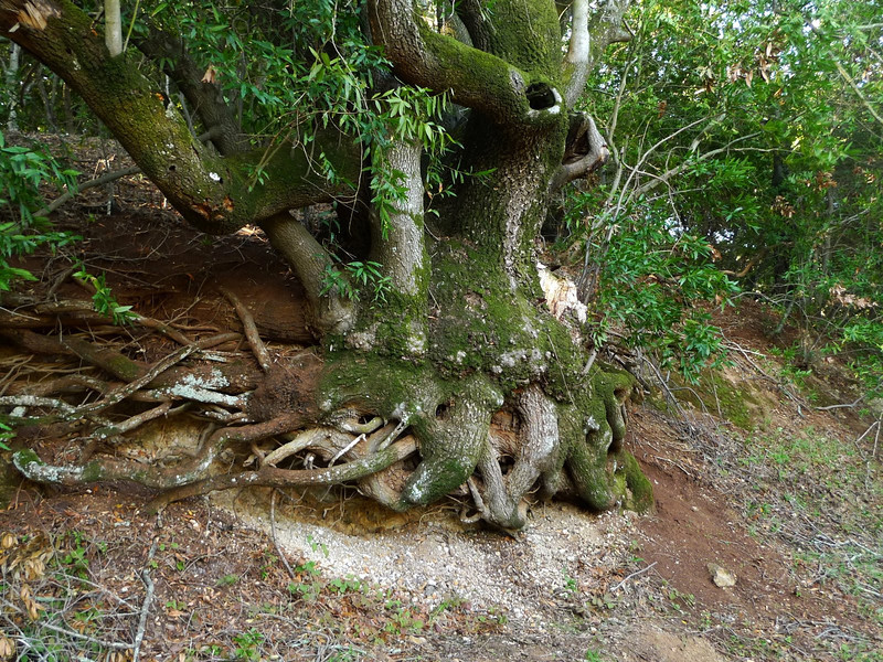 Cool gnarly root tree.