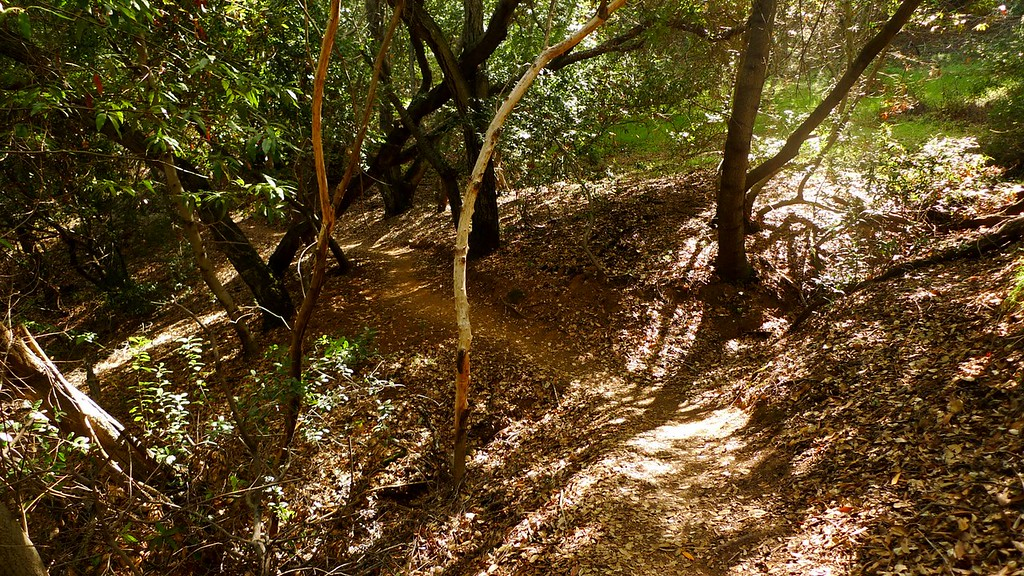 On the shaded New Almaden Trail