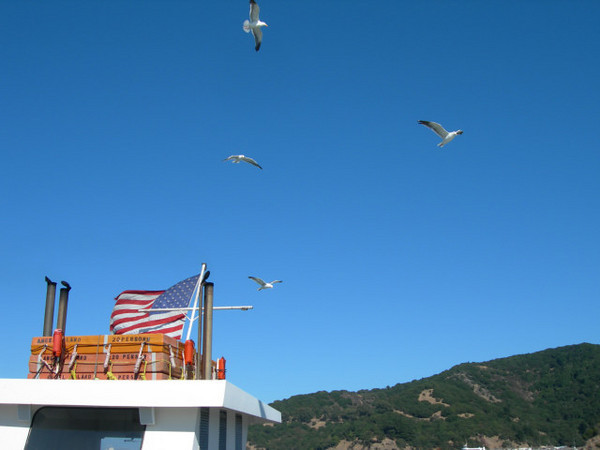 | Seagulls behind ferry