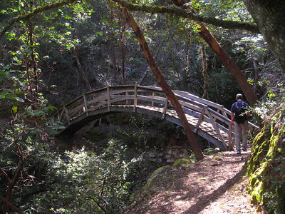 Japanese Style Bridge  Along the Eagle Rock trail in Big Basin