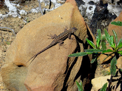Lizard in the sun  It was a beautifully warm spring day!