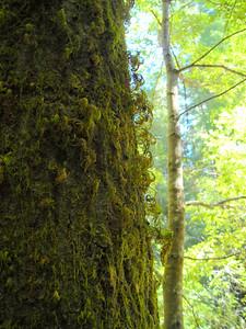 Moss curlies