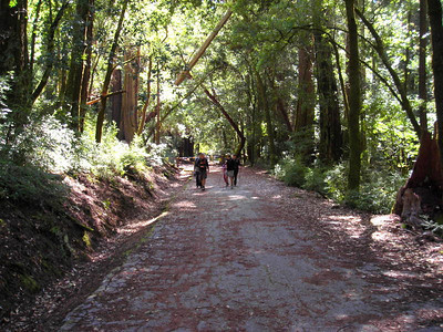 Our group heading up the trail/road  Destination: Ocean View Summit