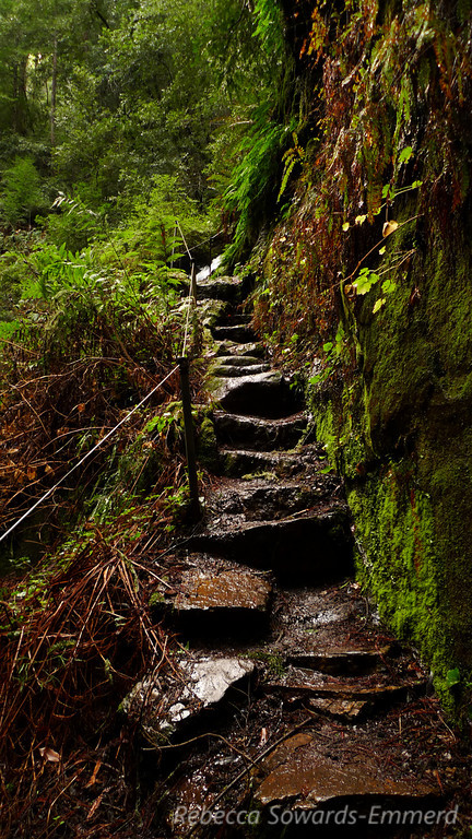 The trail steps away from the falls for a moment