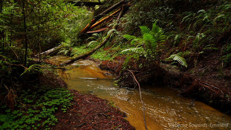 At the bottom of the Golden and Silver falls the creek calms for about half a mile before reaching Berry Creek falls