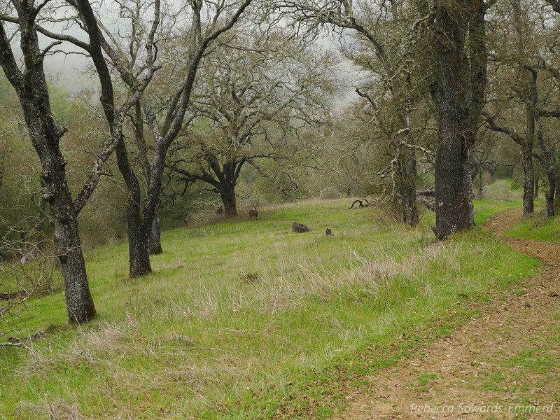 Saw a family of deer as I walked through this oak grove. They were skittish and ran away.