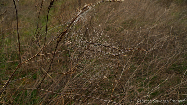 Intact and moist spider web next to the trail.