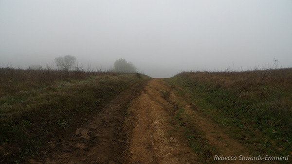 I walk into the fog, appreciating that the damp and cool air is at least helping with my head congestion.