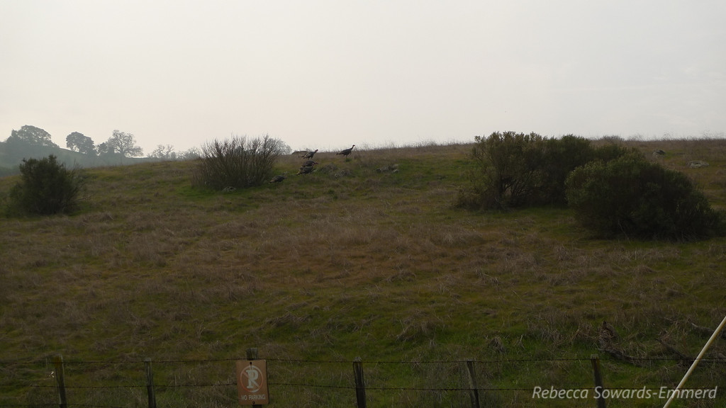 The turkeys decided to hit the trail.