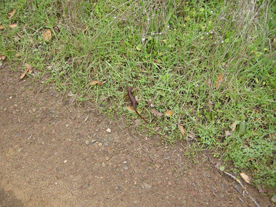 Why did the newt cross the road?
