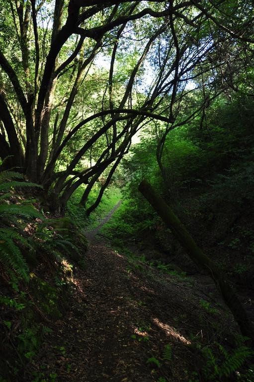 Shaded canyon trail