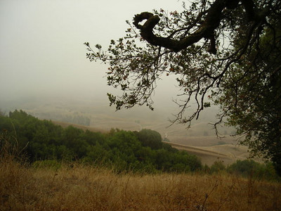 I start climbing into the fog.