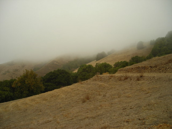 The trail and fog line.