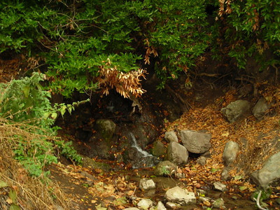 It rained this week, so there was some water trickling down the hill.