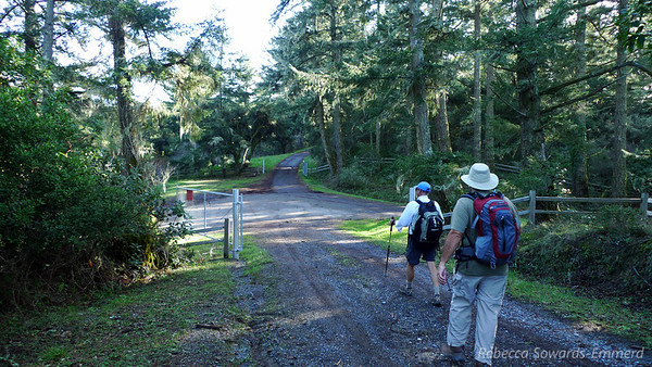We descend off of the exposed ridge and find ourselves in old-growth forest for the remainder of the hike.