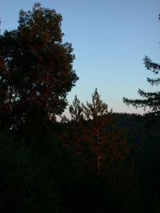 Forest of Nisene Marks at Sunset