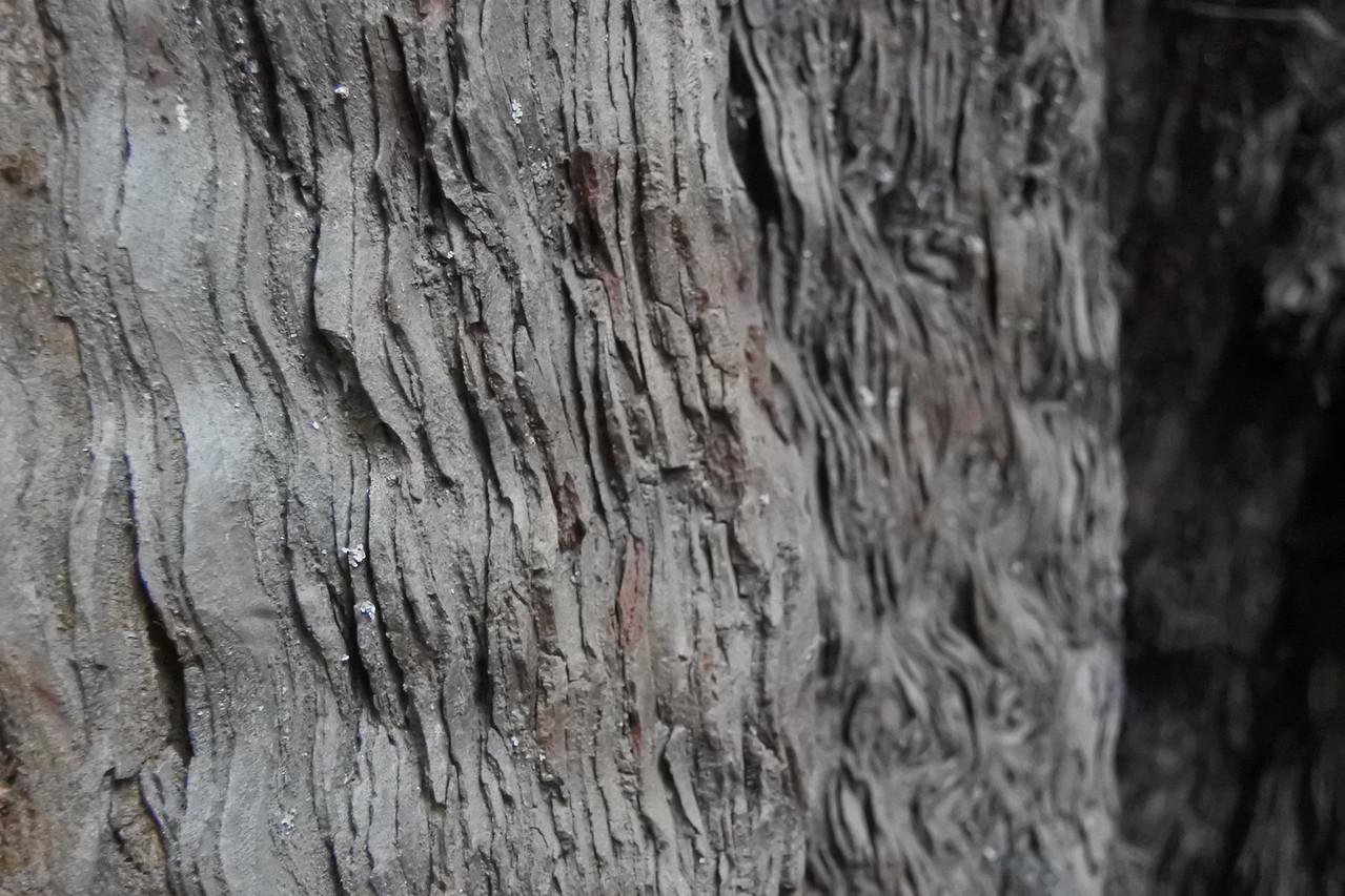 Patterns in Redwood Bark
