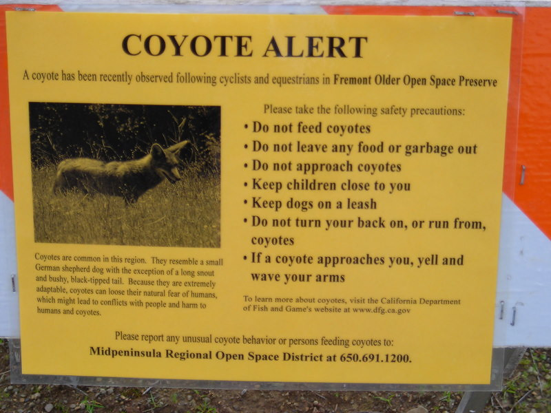 Wiley Coyotes
