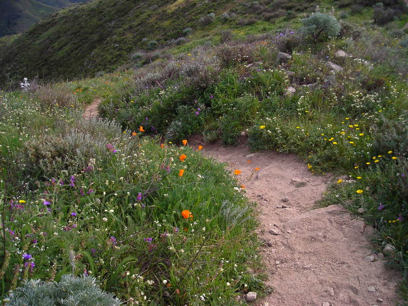 Wildflowers and the trail.
