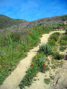 The wildflowers were great.