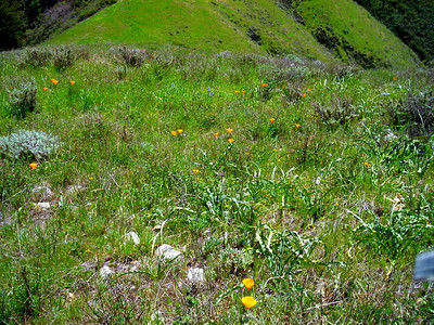 Wildflowers and the green green grass.